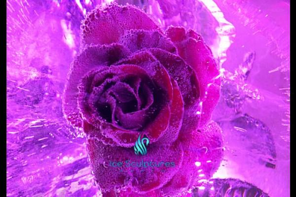 flower-in-ice27E4F11A-AB6B-DD41-083D-4161ED5D3B3F.jpg
