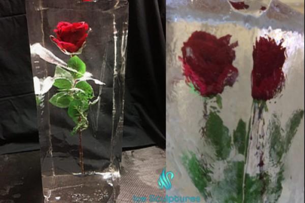 rose-in-ice-172B9574D-D941-420C-5617-FE4D4F257744.jpg