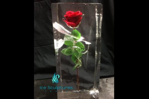 rose-in-ice-3B499BDA1-BA49-D9D4-CCCD-38652B79BC85.jpg